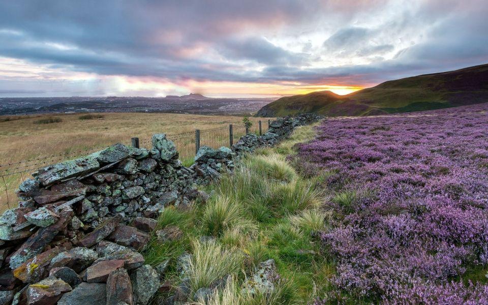 княжика поля шотландии фото что обращать внимание