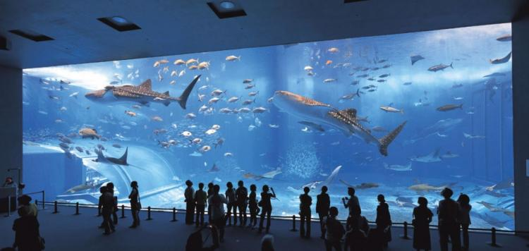 Okinawa Churaumi Aquarium, Мотобу, Япония