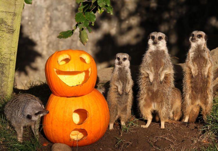 16 животных, которые тоже празднуют Хэллоуин