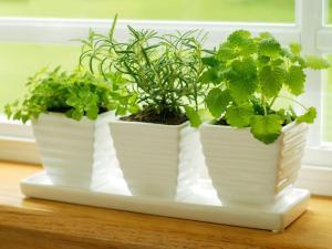 Огород дома: практично, экологично, эстетично