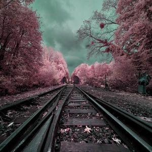 Параллельные миры: инфракрасные пейзажи от французского фотографа