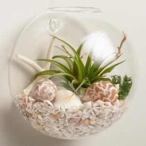 фото сухой аквариум