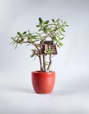 Миниатюрные домики на домашних деревьях